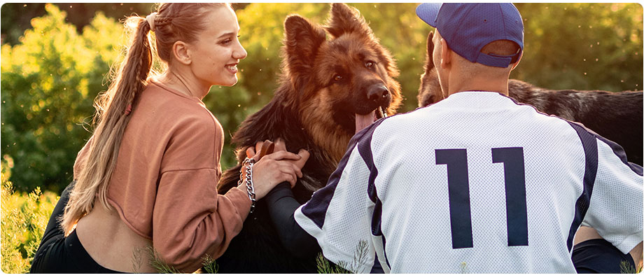 Dog Training Ultimate Guide